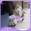 兔毛自然色靴套,腿套