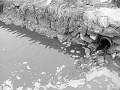 毛皮加工环保未达标 桑坡毛皮企业整体受挫