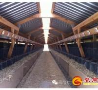 Fur Farming | 现代化农场养殖(上)