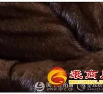 貂毛和狐狸毛有什么区别 貂毛和狐狸毛哪个好
