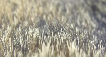 国际毛皮协会关于毛皮生物降解方面的最新研究