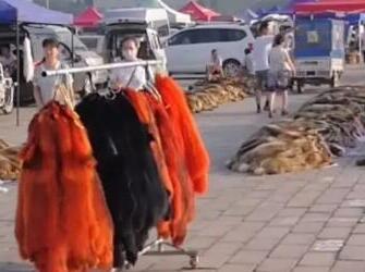 2018.7.25大营皮毛市场行情快报