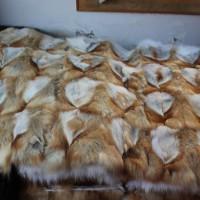 大量收购库存貉子,狐狸碎料褥子