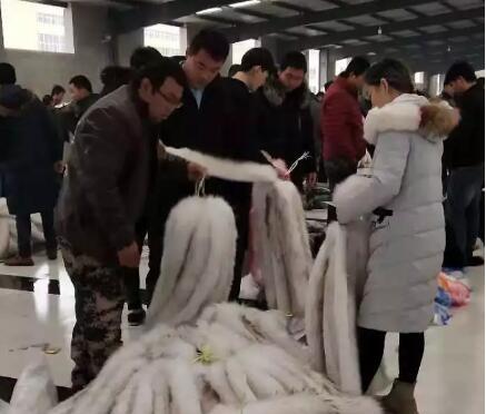 今日大营皮毛市场貉子毛领帽条行情_2018.11.17