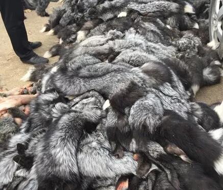 今日尚村皮毛市场狐狸皮行情