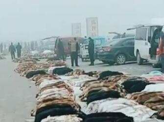 大营皮毛市场行情快报(2019.1.18)