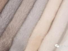 NAFA拍卖会公告:2月拍卖会将供应本年度最高品质的短针毛彩貂皮精选系列