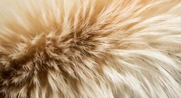 世家皮草向国际毛皮协会提供额外资金