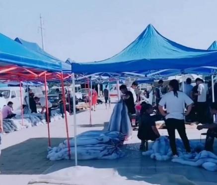 大营皮毛市场最新行情(2019.6.10)