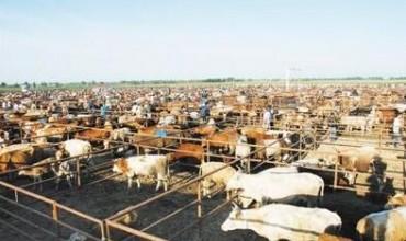 第四届世界皮革大会将讨论牲畜养殖业对气候变化