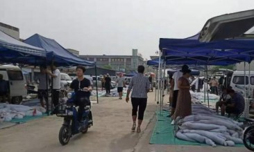尚村皮毛市场狐狸皮行情2019.8.6