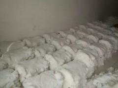 关注大营最近兔皮褥片行情