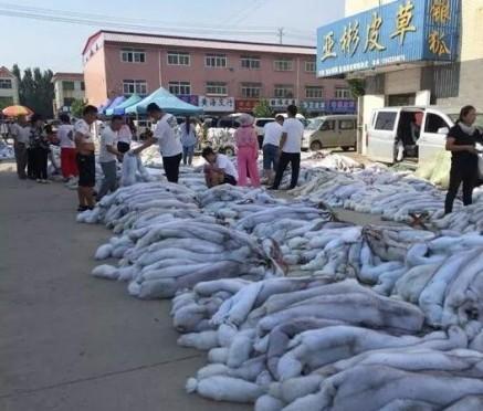 尚村毛皮市场行情(2019.8.19)