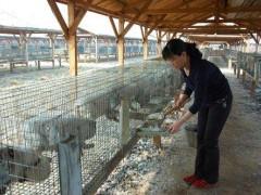 养殖:毛皮动物疾病发生的核心问题