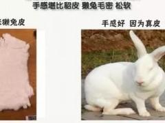 为啥买兔毛皮草要买獭兔毛?