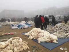 12月10日尚村市场生皮交易情况