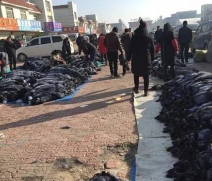 尚村市场小集皮张交易情况概述(2019.12.11)
