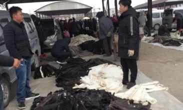 腊月十九尚村皮毛市场貂皮交易持续(2020.1.13)