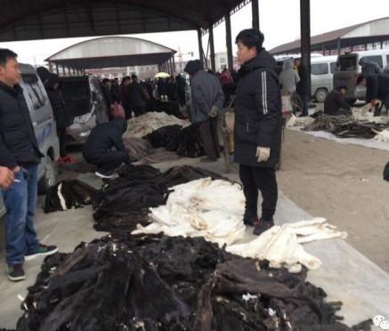 今日尚村皮毛市场大集水貂生皮人山人海 2020.1.13