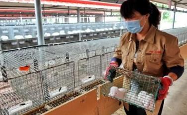 《野生动物保护法》修法难在哪?大数据揭秘超50