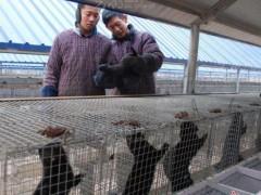 配种期毛皮动物养殖场生物安全管理要点