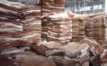 皮革制品行业生产放缓导致原料皮积压