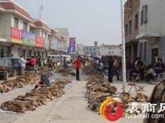 5月20日尚村市场狐狸、貉子生皮交易情况