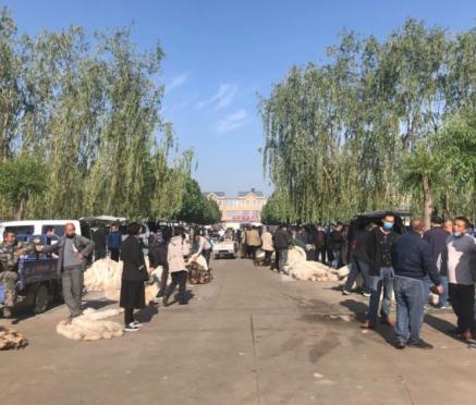 2020.5.24昌黎皮毛市场行情快报