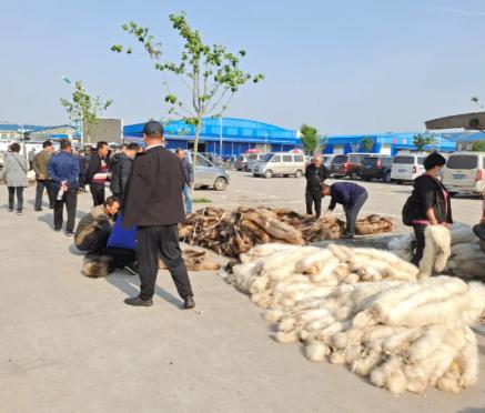 乐亭皮毛市场行情(2020.5.29)