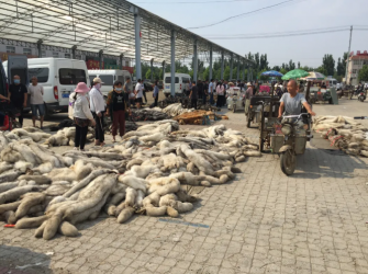 6月19日尚村狐狸、貉子生皮交易情况
