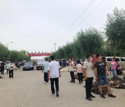 昌黎皮毛市场行情(成交增多2020.7.12)