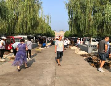 昌黎皮毛市场行情信息2020.8.1