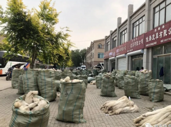 昌黎皮毛市场行情2020.9.22
