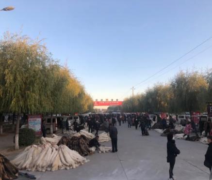 昌黎皮毛交易市场行情2020.10.28