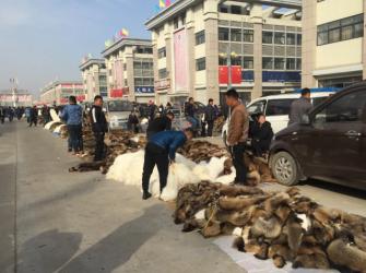 尚村毛皮市场行情(2020.11.1)