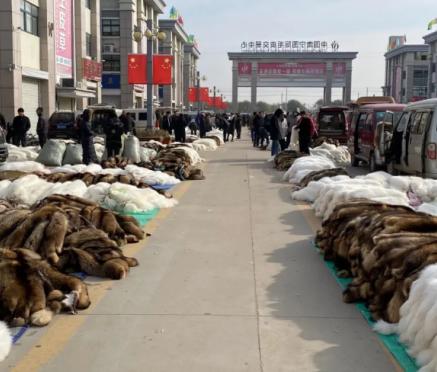 尚村毛皮市场行情(2020.11.23)