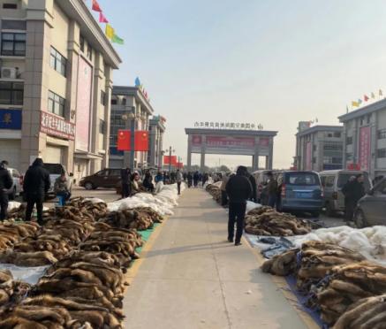 尚村毛皮市场蓝狐皮热度减小(2020.11.30)