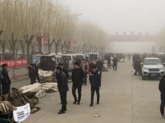 昌黎皮毛市场行情2021.3.28
