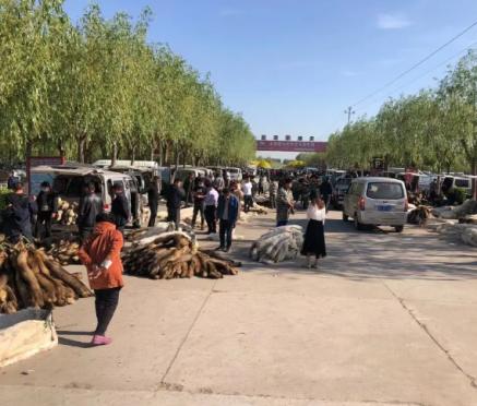昌黎皮毛市场行情2021.05.17