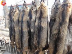 锦州黑山的狐、貉行情动态