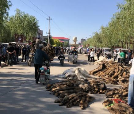 2021.6.6昌黎皮毛市场行情