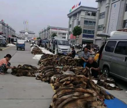 今日尚村市场大集狐貉价格行情2021.7.13