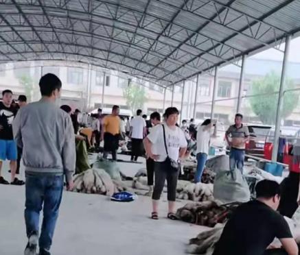 今日乐亭皮毛市场行情动态 2021.7.16