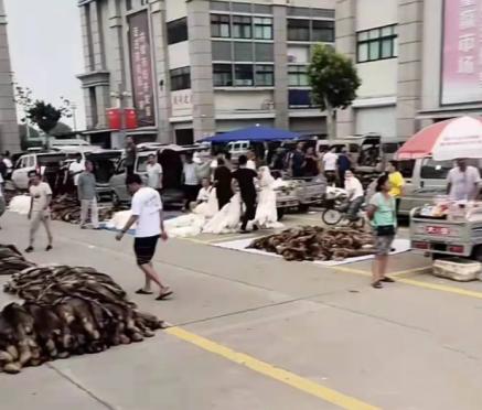 今日尚村皮毛市场大集狐、貉交易情况2021.7.18