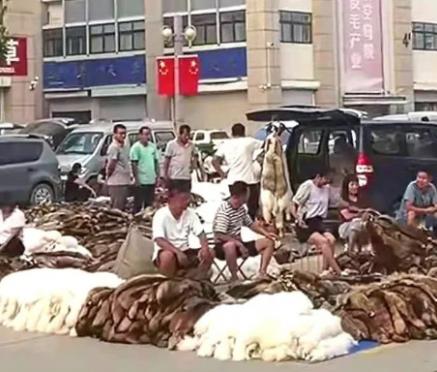 今日尚村皮毛市场小集狐、貉、貂销售祥情 2021.7.20
