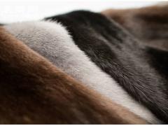 世家皮草(Saga Furs)2021-2022年度拍卖会日程