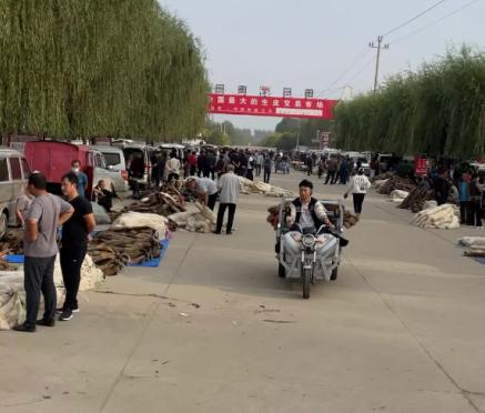 昌黎皮毛市场行情分析2021.9.28